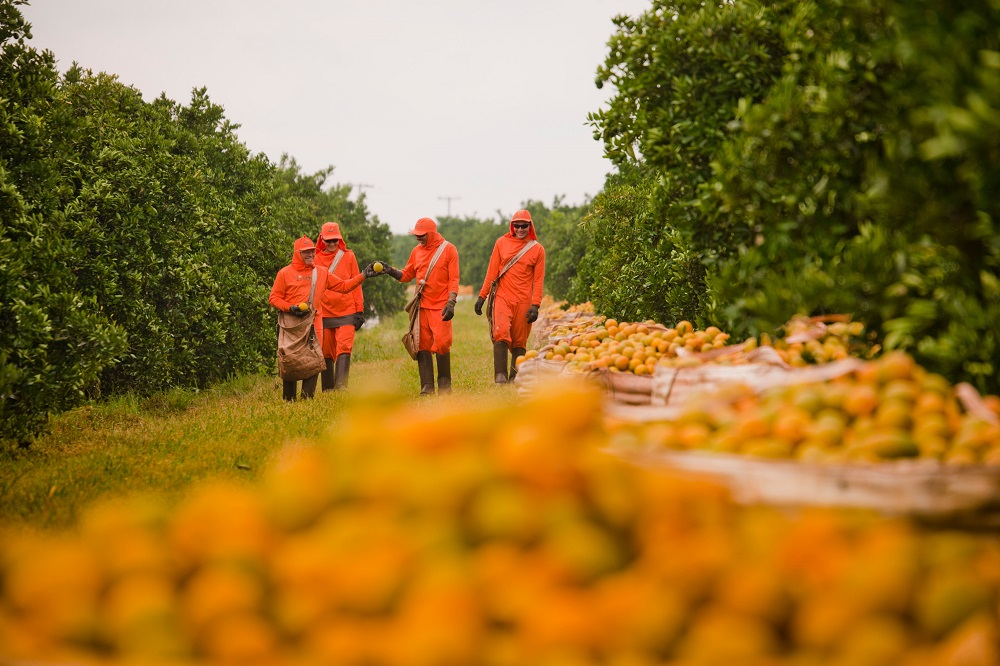 The sector employs many temporary workers in the orange harvest and, therefore, requires special attention to labor relations.